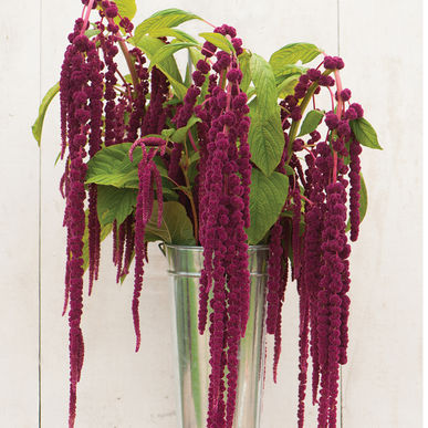 01139_01_love_lies_bleeding