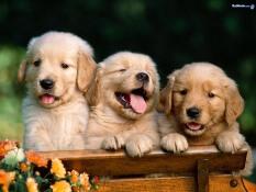 happy-puppies-i-love-animals-2824533-1024-768